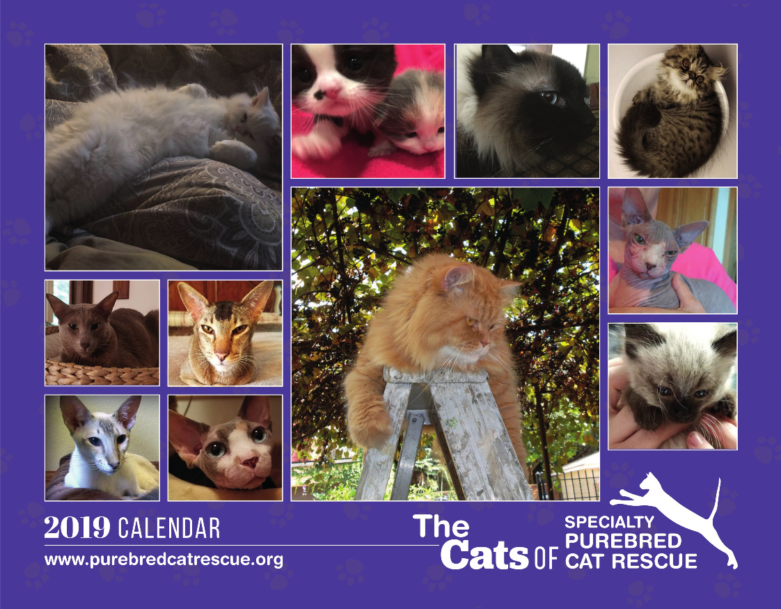 Cats of Specialty Purebred Cat Rescue 2019