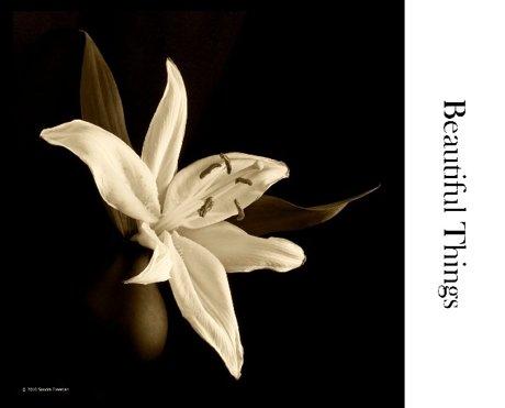 Beautiful Things Exhibit Catalog