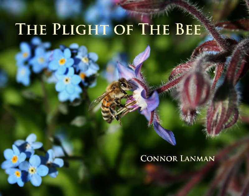 The Plight of the Bee (full hardcover)